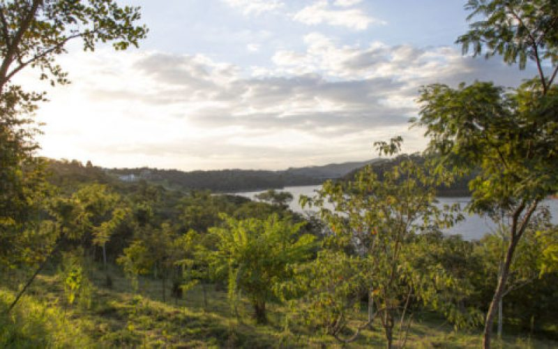Área-em-restauração-perto-da-Represa-Atibainha-550×300
