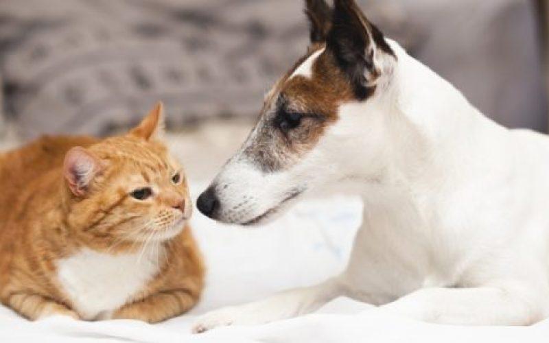 Expectativa-é-vacinar-10.037-cães-e-gatos-acima-de-três-meses-de-idade-550×300