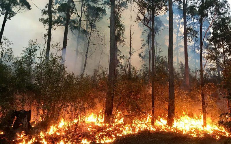 a-bushfire-burning-along-the-side-of-a-dirt-road-WRGMX6L